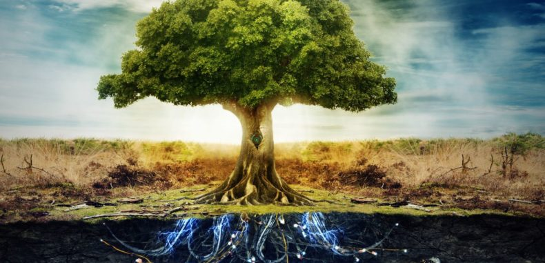 5 Things You Need to Know About The Tree of Life
