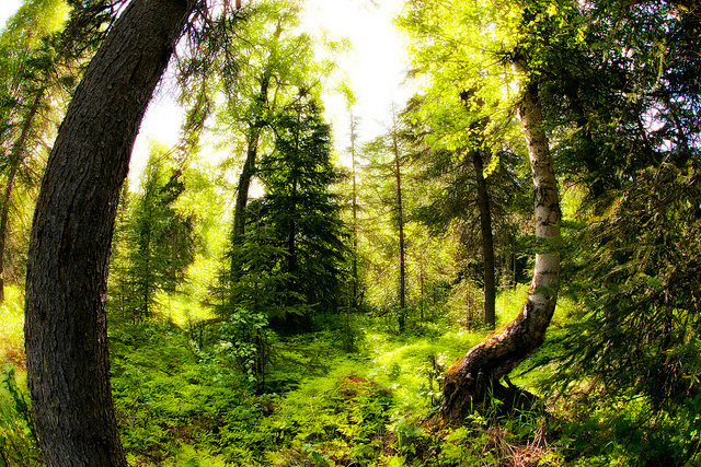 Trees Help Us Heal This Is How You Can Use Their Energy