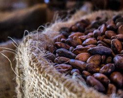 Cacao antioxidants