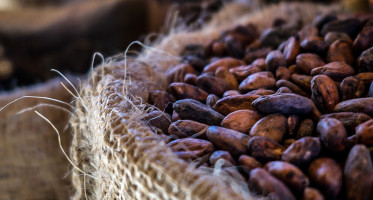 Cacao antioxidants