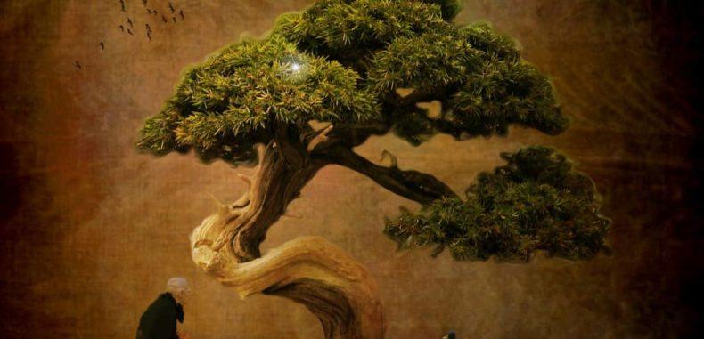 Wisdom From A Bonsai Tree