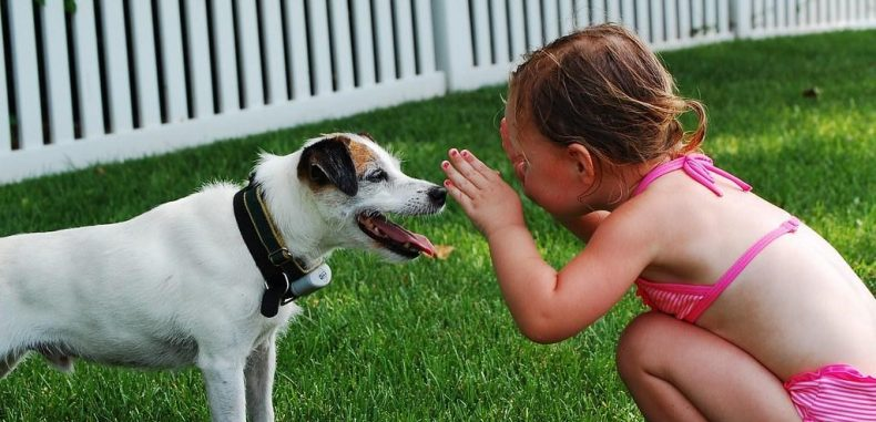 How Pets Can Improve Your Quality of Life