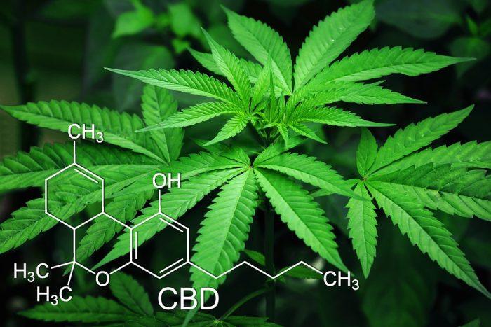 Marijuana and Spirituality: A Brief History